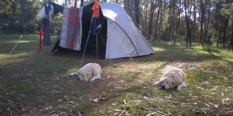 camping goomburra